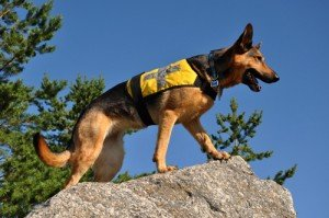 Why in a former life I was a cadaver dog